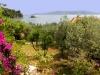 Aloe II View